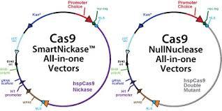 Lần đầu tiên 'xóa sổ' virus HIV trong DNA của người
